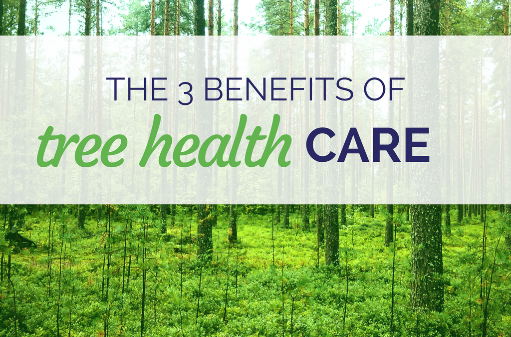 The 3 Benefits of Tree Health Care Graphic - The Best Tree Care Company Lakeland - Anglin Brothers Tree Care