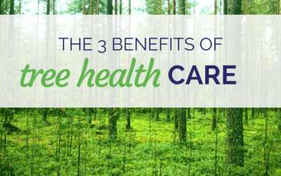 The 3 Benefits of Tree Health Care