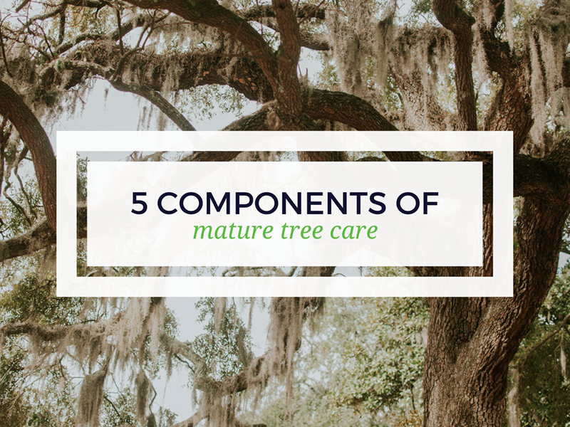 5 Components of Mature Tree Care