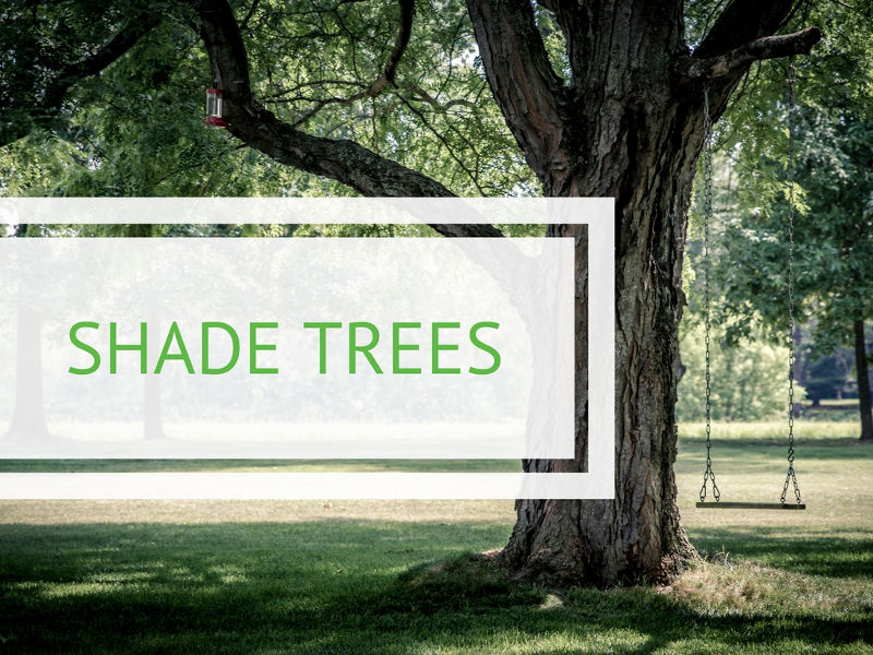 Beat the Heat with Shade Trees