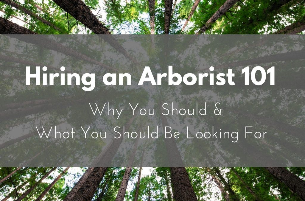 Hiring and Arborist 10: Why You Should & What You Should Be Looking For | Anglin Brothers Tree Care | Lakeland, FL