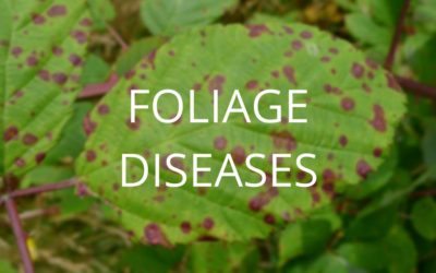 Diagnosis and Control Series Part 1: Foliage Diseases