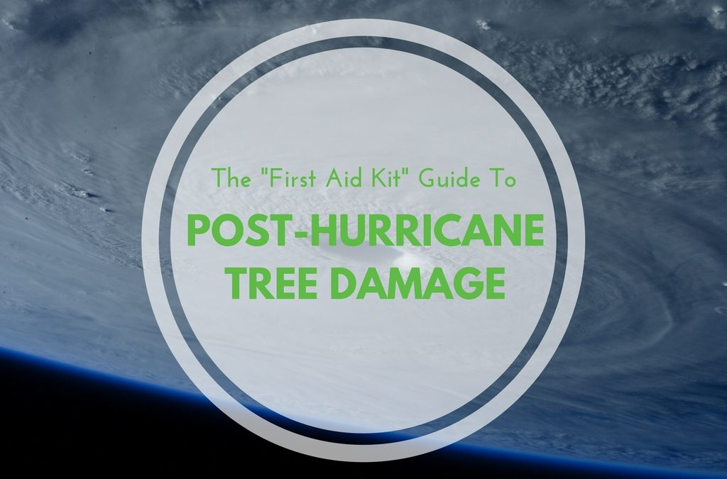 "The ""First Aid Kit"" Guide to Post-Hurricane Tree Damage"
