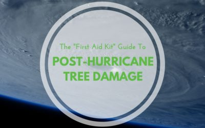 """The """"First Aid Kit"""" Guide to Post-Hurricane Tree Damage"""