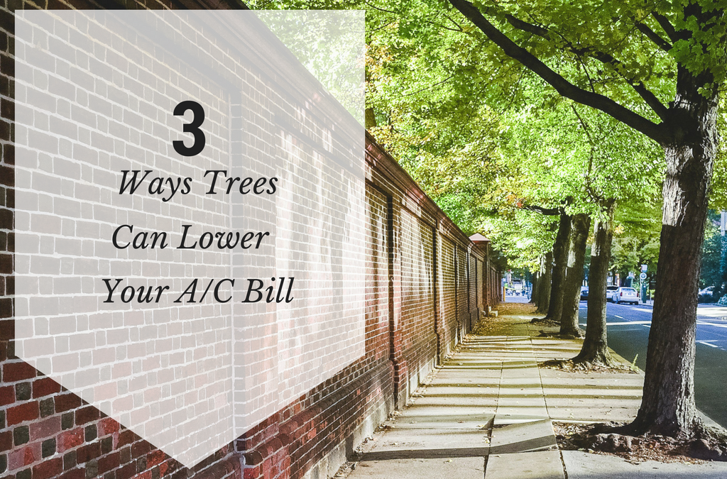 3 Ways Trees Can Lower Your A/C Bill - Tree Care Lakeland - Energy Conserving Landscape Strategies