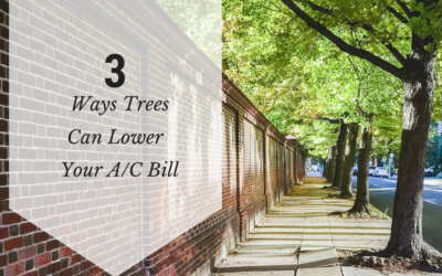 3 Ways Trees Can Lower Your AC Bill
