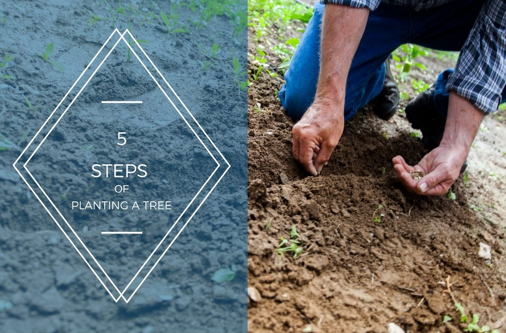 5 Steps of Planting a Tree