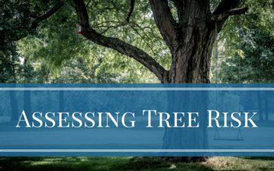 Assessing Tree Risk