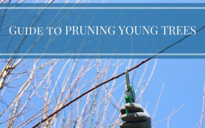 Guide to Pruning Young Trees