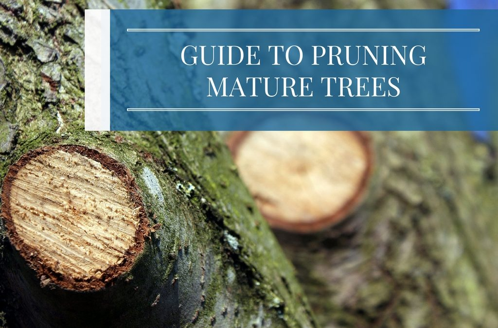 Guide to Pruning Mature Trees
