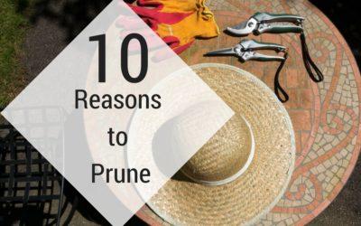 Top 10 Reasons to Prune