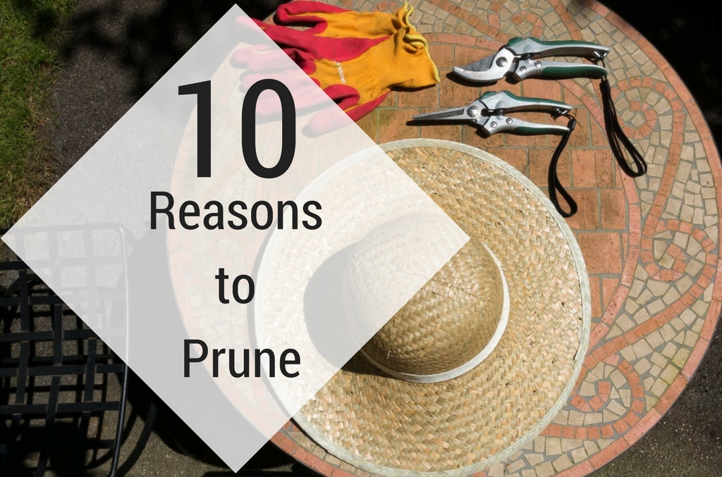 10 Reasons to Prune, Pruning, Lakeland Florida, Anglin Brothers Tree Care