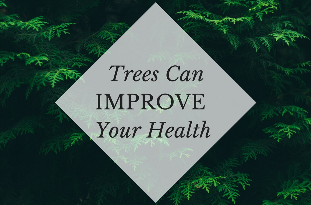 Study Shows How Trees Can Improve Your Health, Anglin Brothers Tree Care, Lakeland tree Care, health benefits of trees