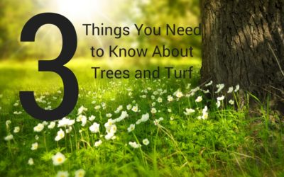 3 Things You Need to Know About Trees and Turf