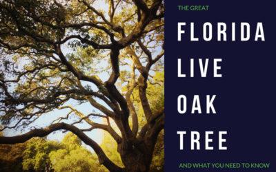 Florida Live Oak Trees