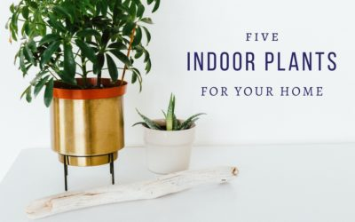Five Indoor Trees for Your Home