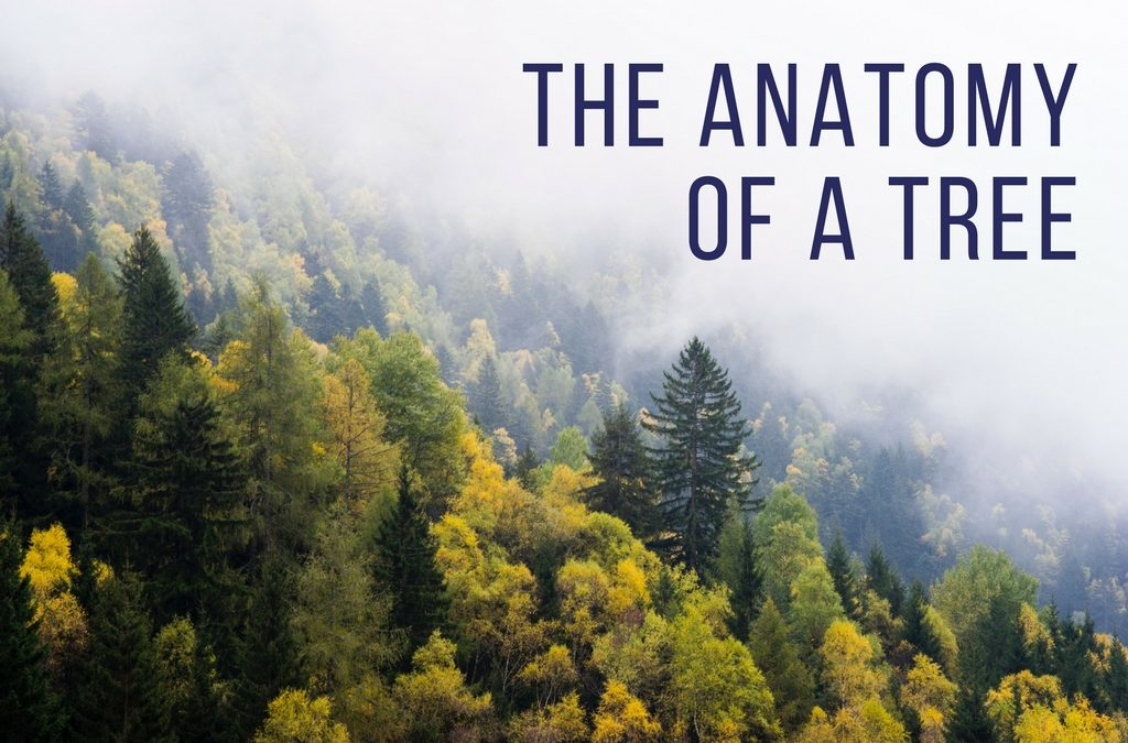 The Anatomy of a Tree