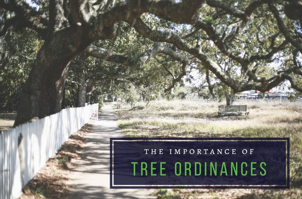 The Importance of Tree Ordinances - Anglin Brothers Tree Service