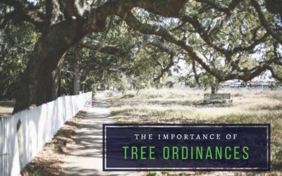 The Importance of Tree Ordinances