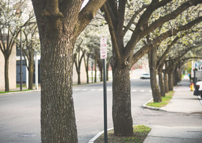 TREE ORDINANCES1