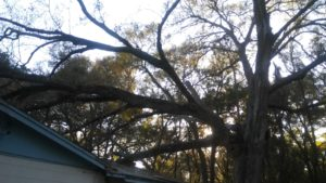 Large Tree Fa | Anglin Brothers Tree Service | Polk County | Tree Preservationllen on Home