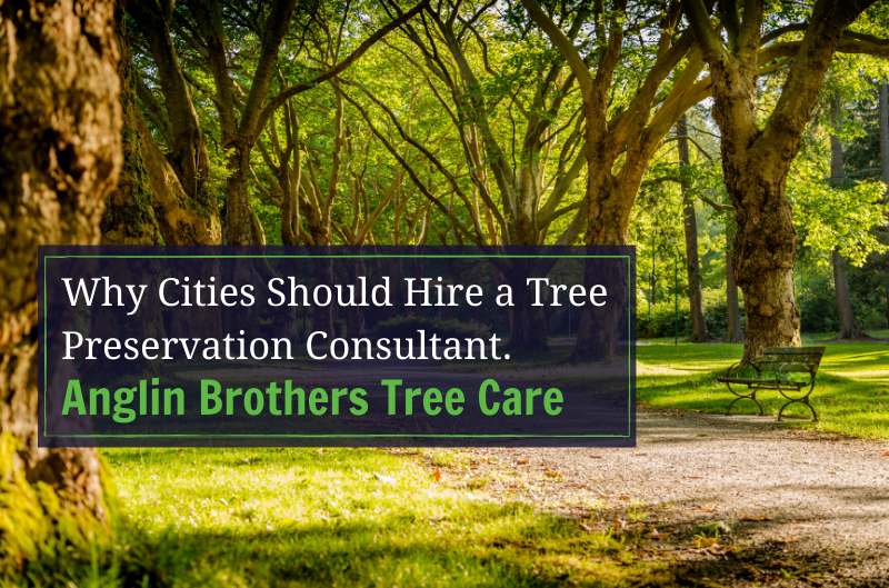 Why Cities Should Hire a Tree Preservation Consultant