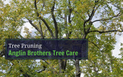 Why Tree Pruning Is Important