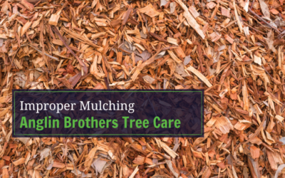 Benefits of Mulching Your Trees