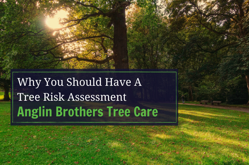 What is a Tree Risk Assessment?