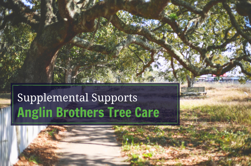 What Are Supplemental Supports