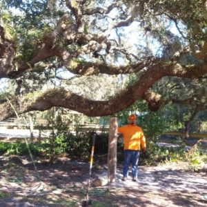 ISA Board Certified Master Arborist | Anglin Brother's Tree Care | Lakeland FL | Healthy Roots