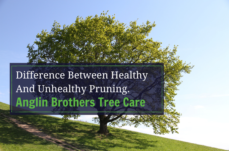 Difference Between Healthy And Unhealthy Pruning