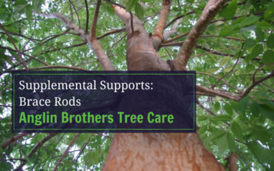 Supplemental Supports: Brace Rods