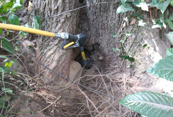 Deep Root Fertilization | Anglin Brothers Tree Care